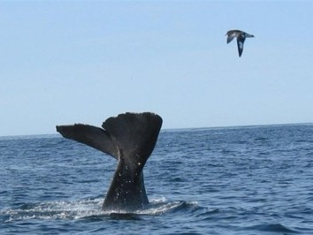 Whales Tale on Kaikoura Whalewatching Tour