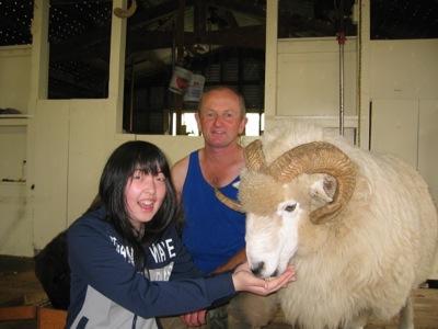 Christchurch Farm Tour feeding the ram