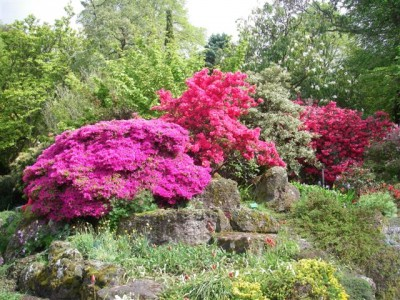 Azaleas on Christchurch Garden Tour