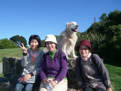 Golden Retriever Dog with Japanese guests on Hiking Tour