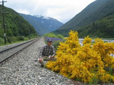Arthurs Pass Tranz Alpine Railway track