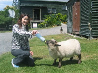Spring lamb being fed on a Christchurch Farm Tour