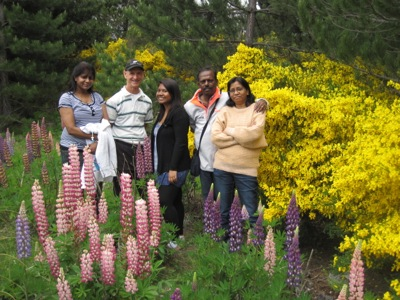 Lake Tekapo Lupins and Broom Flowers